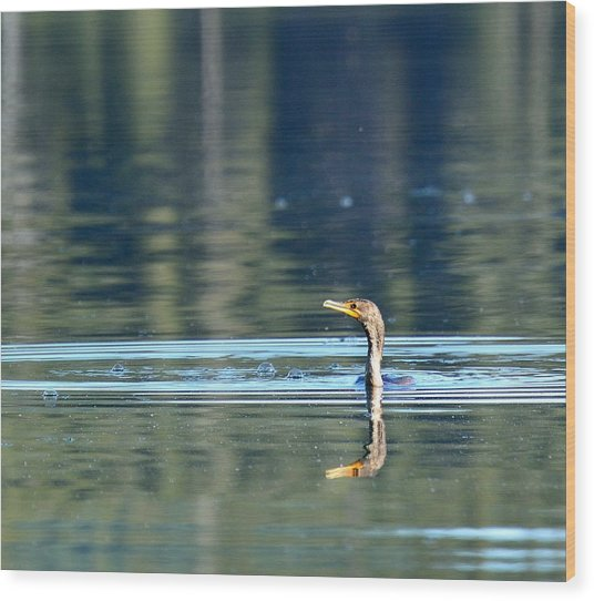 Two Headed Cormorant Wood Print by Rich Rauenzahn