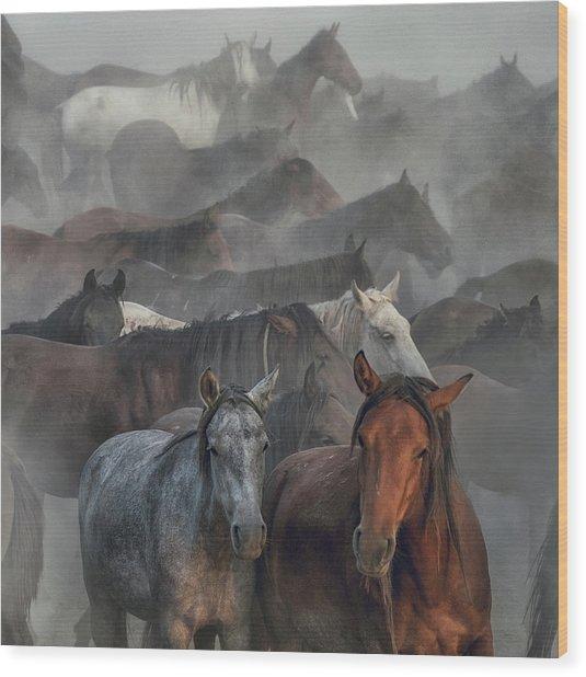 Two Horses Wood Print by H??seyin Ta??k??n