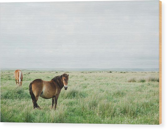 Two Horses In Field Wood Print by Suzanne Marshall