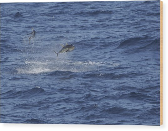 Two Jumping Yellowfin Tuna Wood Print
