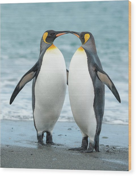 Two King Penguins On A Beach In South Wood Print by Elmvilla