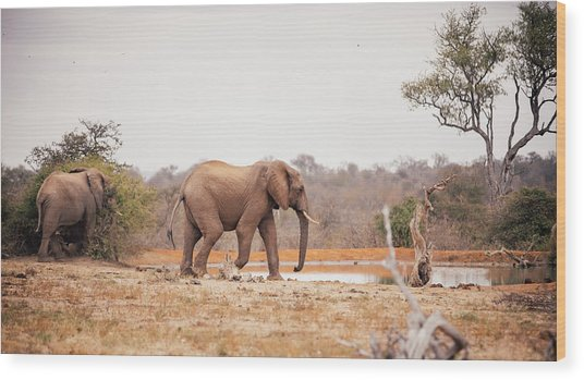 Two Large Elephants Approaching A Wood Print by Wundervisuals