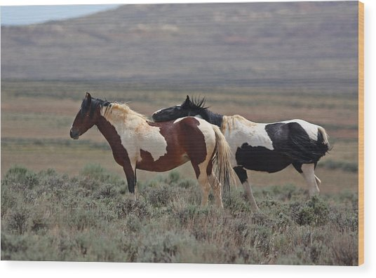 Two Mustangs In Wyoming Wood Print
