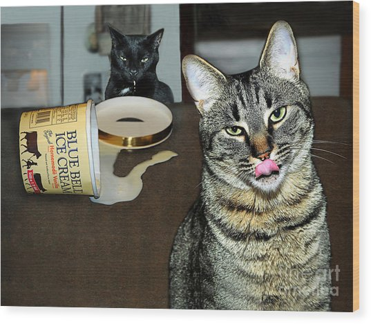 Two Naughty Cats Wood Print
