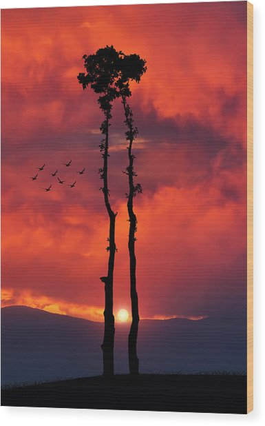 Two Oaks Together In The Field At Sunset Wood Print