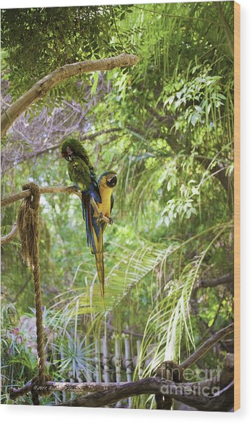 Two Parrots Wood Print