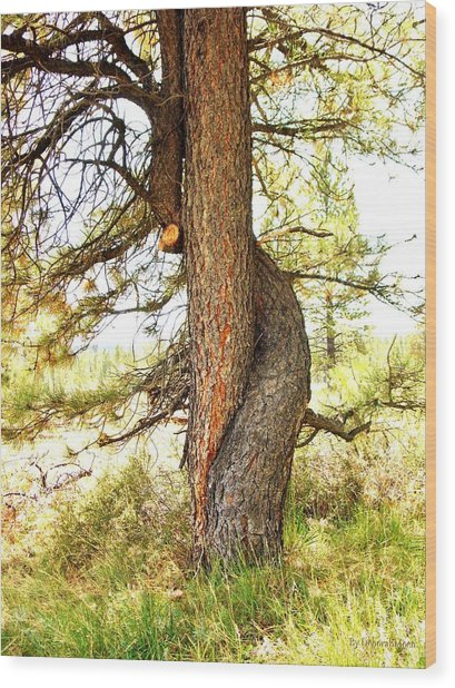 Two Pines Intertwined  Wood Print