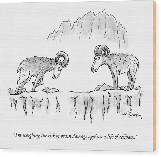 Two Rams Talk To Each Other Wood Print