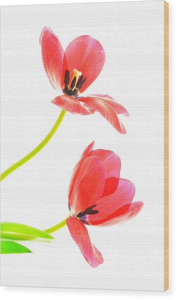 Two Red Transparent Flowers Wood Print