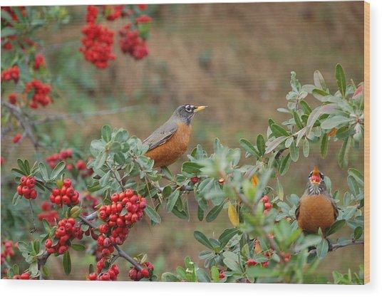 Two Robins Eating Berries Wood Print