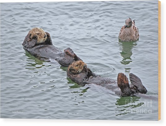 Two Sea Otters And A Gull Wood Print