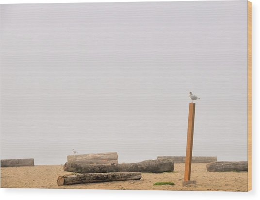 Two Seagull Solitudes Wood Print by Doug Farmer