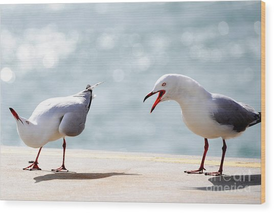 Two Seagulls Wood Print