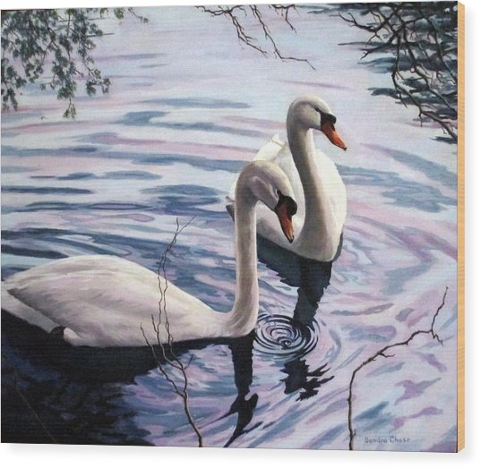 Two Swans A Swimming Wood Print