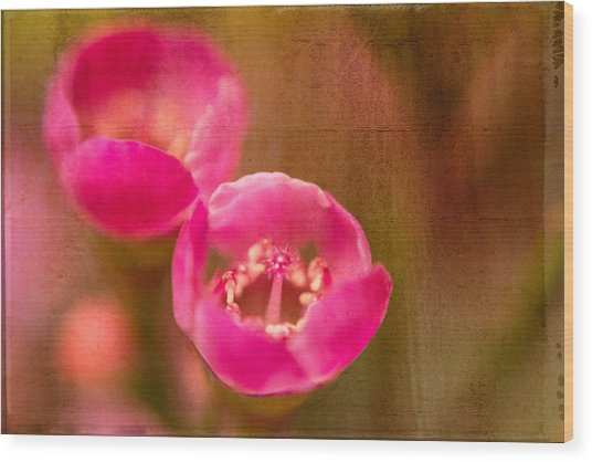 Two Tiny Pink Flowers Wood Print