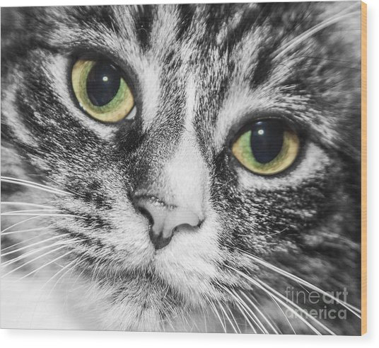 Two Toned Cat Eyes Wood Print