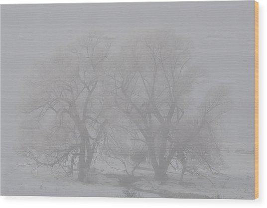 Two Trees Wood Print by BandC  Photography
