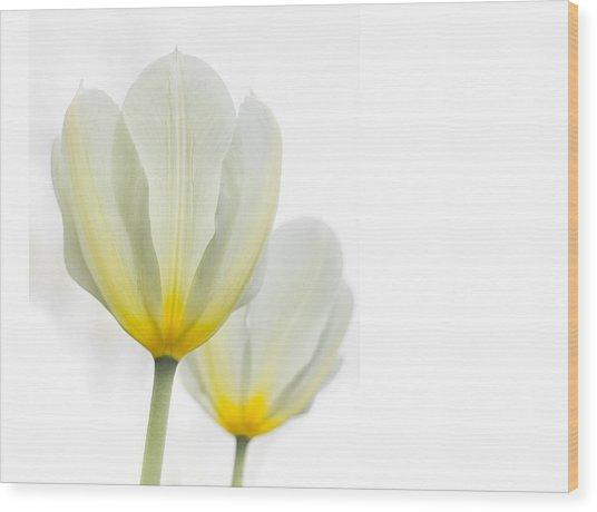 Two Tulips 1 Wood Print