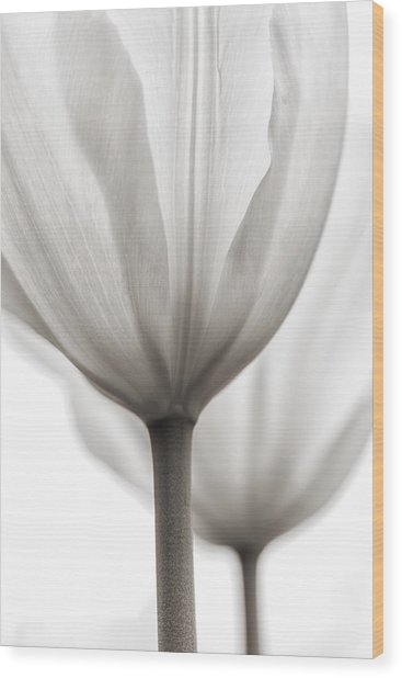 Two Tulips Bw 1 Wood Print