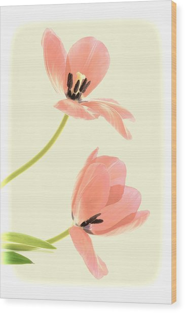 Two Tulips In Pink Transparency Wood Print