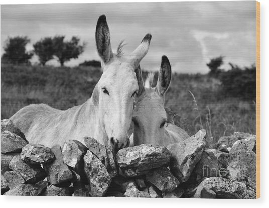 Two White Irish Donkeys Wood Print