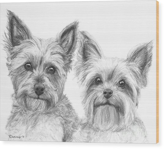 Two Yorkshire Terriers In Charcoal Wood Print