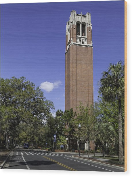 Uf Century Tower And Newell Drive Wood Print