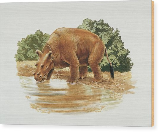 Uintatherium Wood Print by Deagostini/uig/science Photo Library