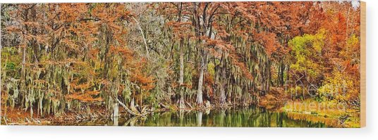 Ultimate Cypress Panoramic Wood Print