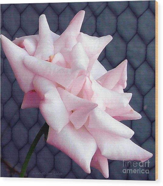 Una Rosa D'autunno Wood Print