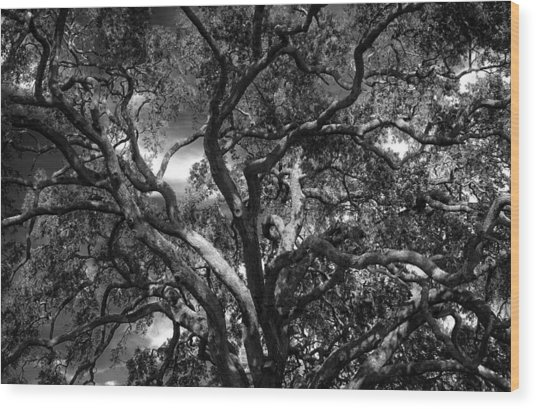 Under A Tree In Black And White Wood Print