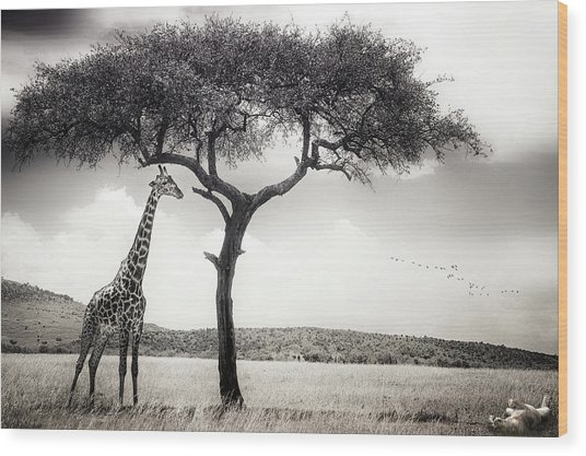 Under The African Sun Wood Print