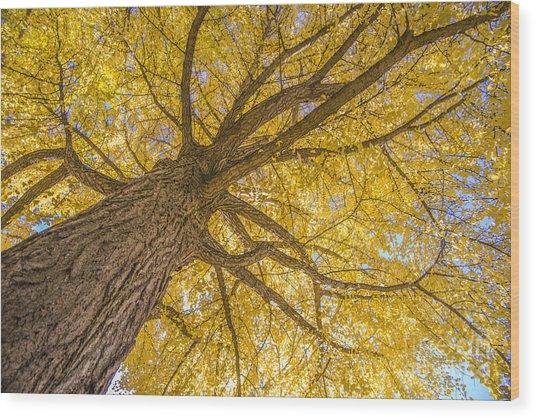 Under The Autumn Tree Wood Print