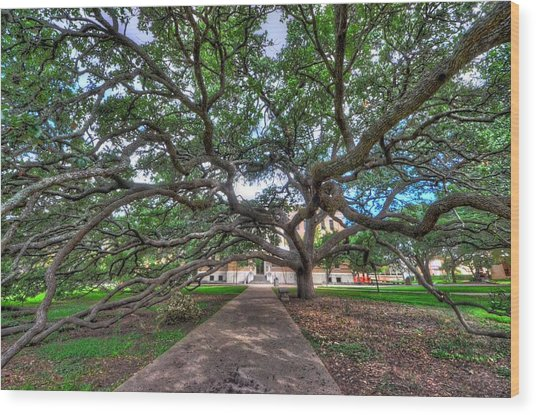 Under The Century Tree Wood Print
