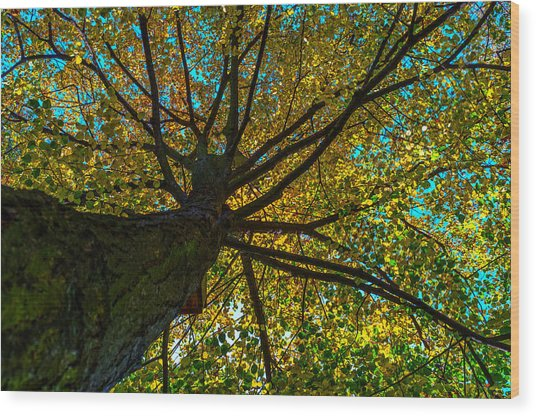 Under The Tree S Skirt Wood Print