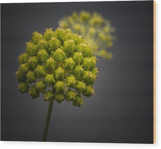 Unknown Wildflower Wood Print
