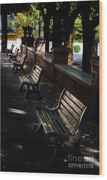unoccupied park benches in the shade of trees in Palestrina Wood Print