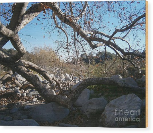 Untitled Photograph 2 Wood Print by Drew Shourd