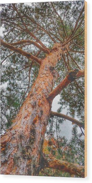 Up A Tree Wood Print by Tom Kiebzak