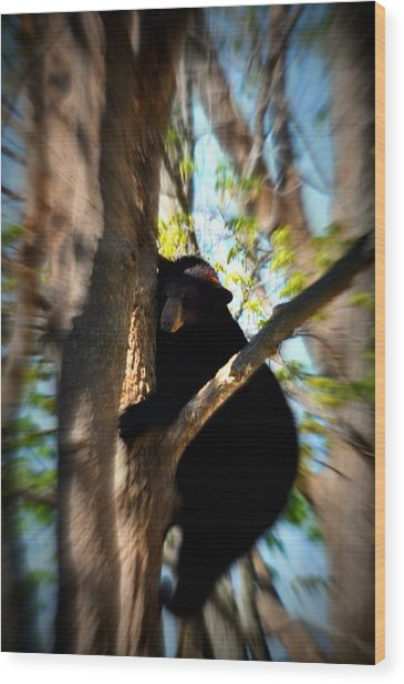 Up A Tree Wood Print by Valarie Davis