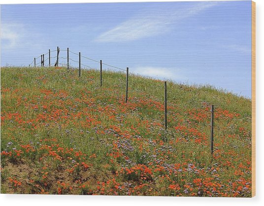 Up The Poppy Hill Wood Print