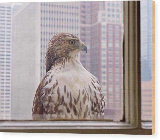 Urban Red-tailed Hawk Wood Print