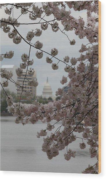 Us Capitol - Cherry Blossoms - Washington Dc - 01132 Wood Print by DC Photographer