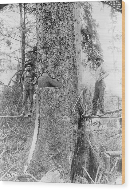 Us Forestry Wood Print by Library Of Congress