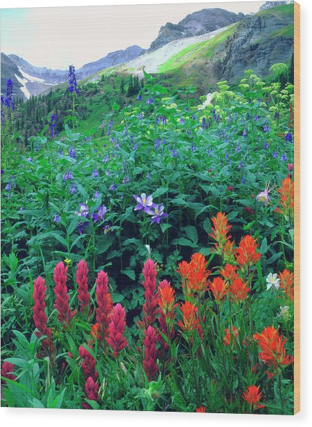 Usa, Colorado, Wildflowers In Yankee Wood Print by Jaynes Gallery