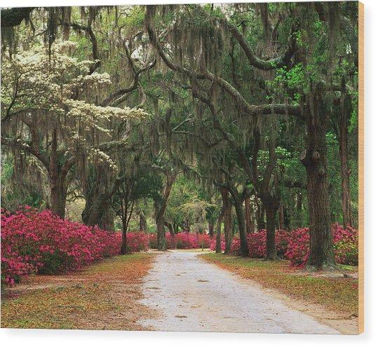 Usa, Georgia, Savannah, Road Lined Wood Print by Adam Jones