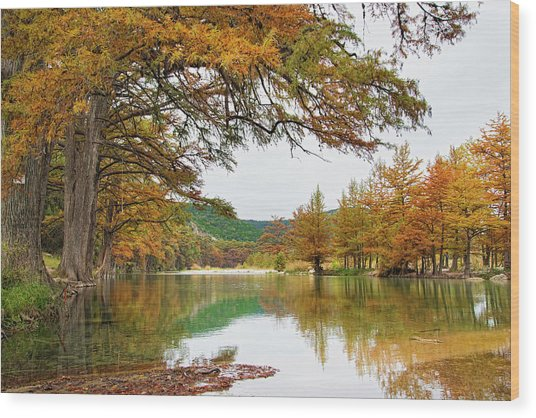 Usa, Texas, Cypress Tree With Golden Wood Print by Westend61