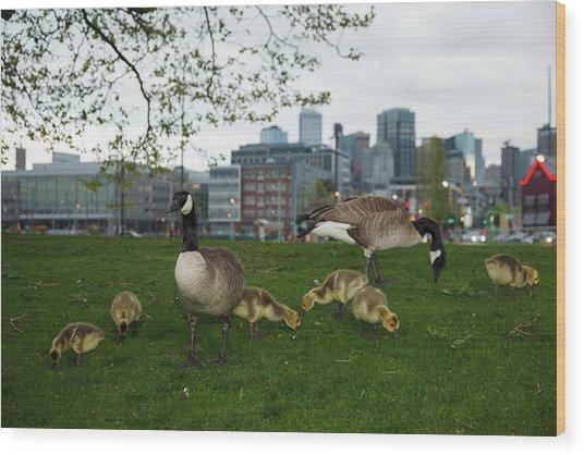 Usa, Washington, Seattle, South Lake Wood Print