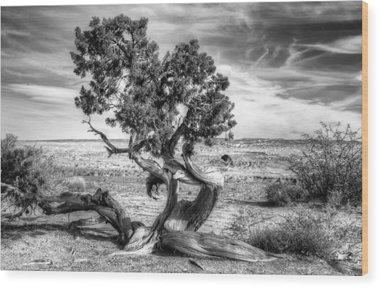 Utah Desert Survivor Wood Print