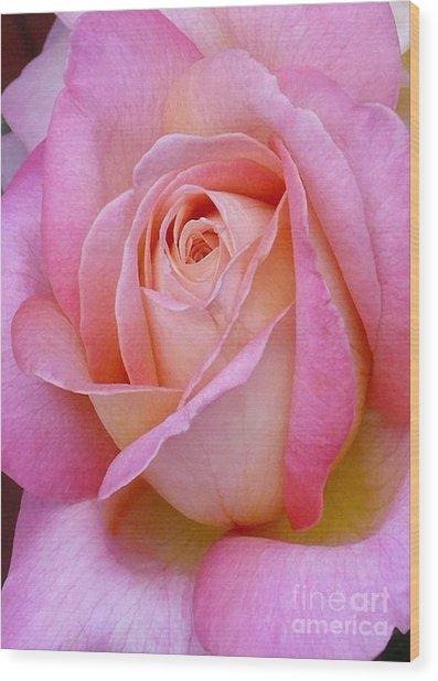 Valentine Pink Rose Bud Wood Print
